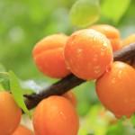 Trockenobst und Gemüse: Tipps für die Herstellung von Fruchtleder