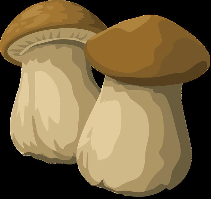 Steinpilze sind getrocknet noch leckerer!