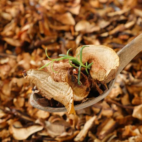 champignons getrocknet